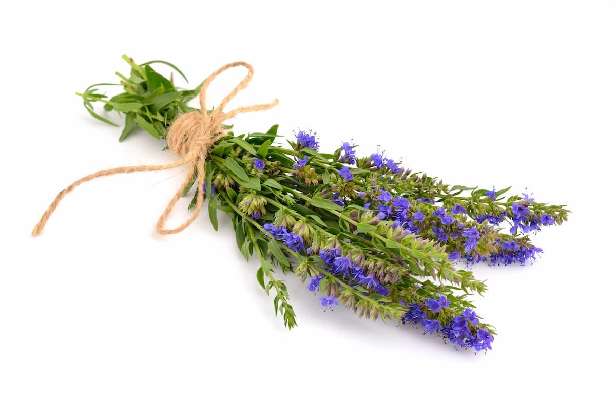 ヒソップの花束