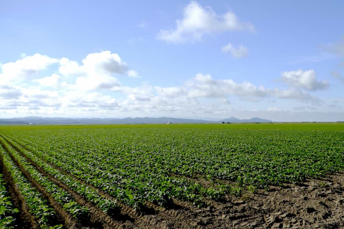 作物を育てる素敵な畑